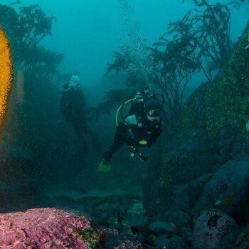 Buceo Algarrobo
